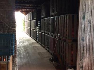 Bewaren van pompoenen van september tot april: verluchting en verwarming zijn de sleutels
